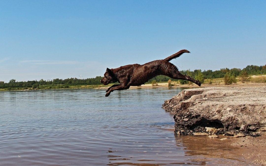 Hunde Foto: Anne und Carlos – Badespaß