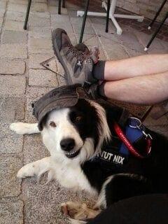 Hunde Foto: Elke und Elke Stümpfl – Unser Schmusebär