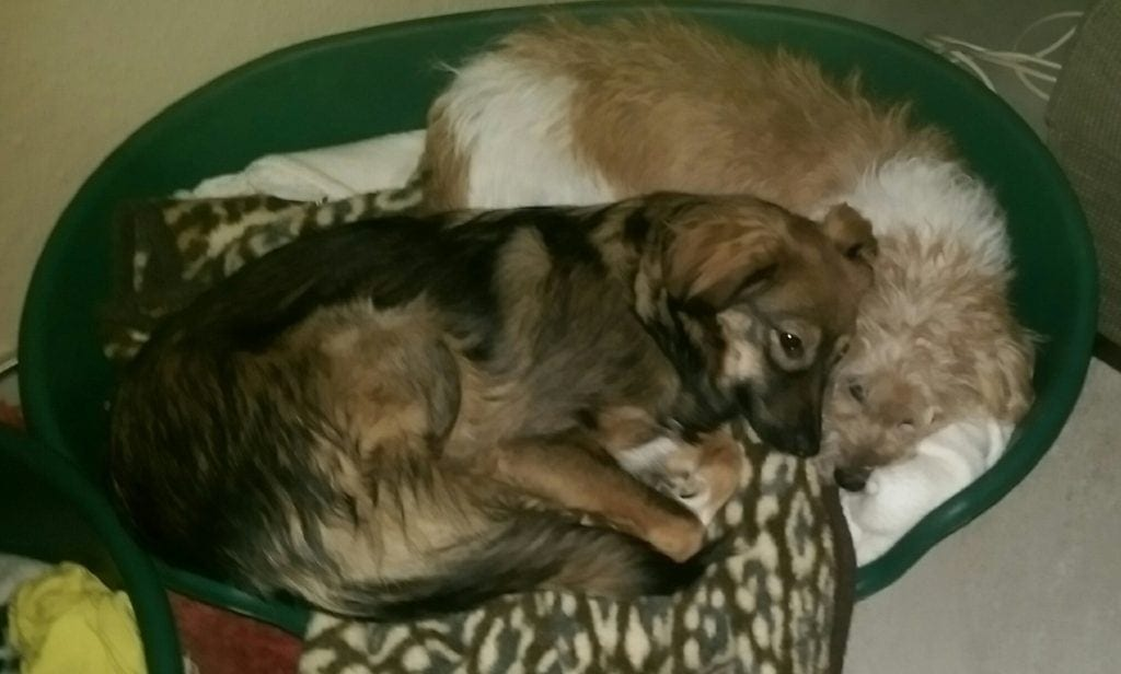 Hunde Foto: Silvia und Dunja und Nelly - Silvia