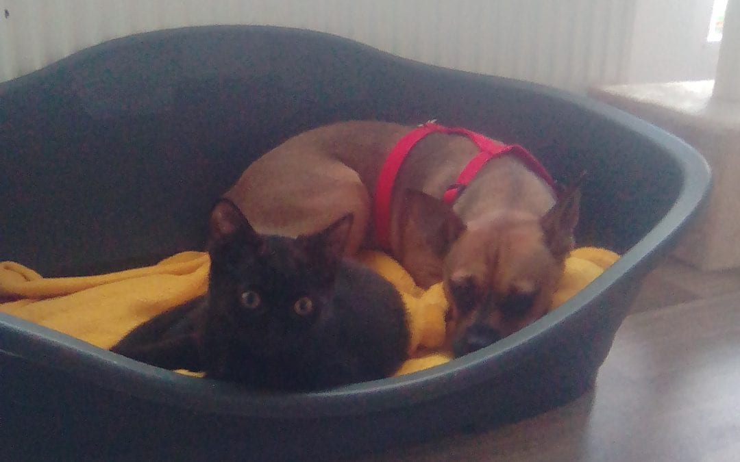 Hunde Foto: Olga und Luna – Beste Freunde