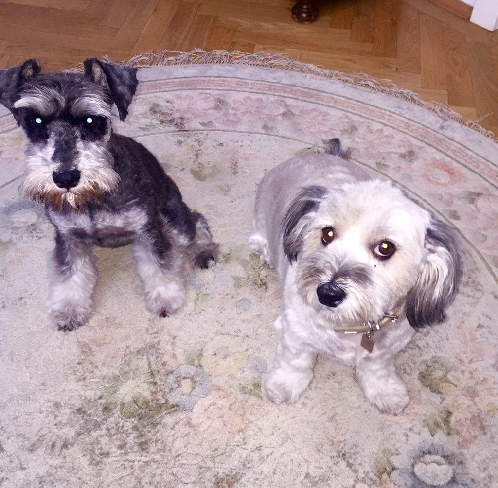 Hunde Foto: Katharina Anna und Constanze & Maja - Freundinnen Conny-Baby & Maja-Baby