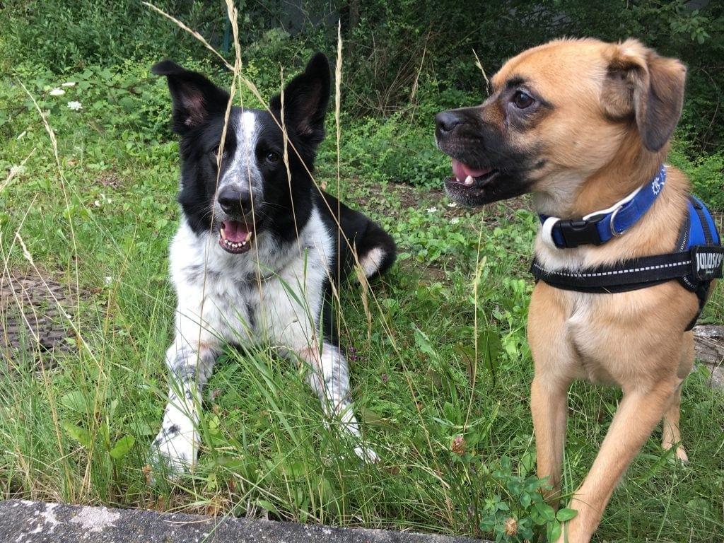 Hunde Foto: Stefan und Snoopy und Heros - Beste Freunde