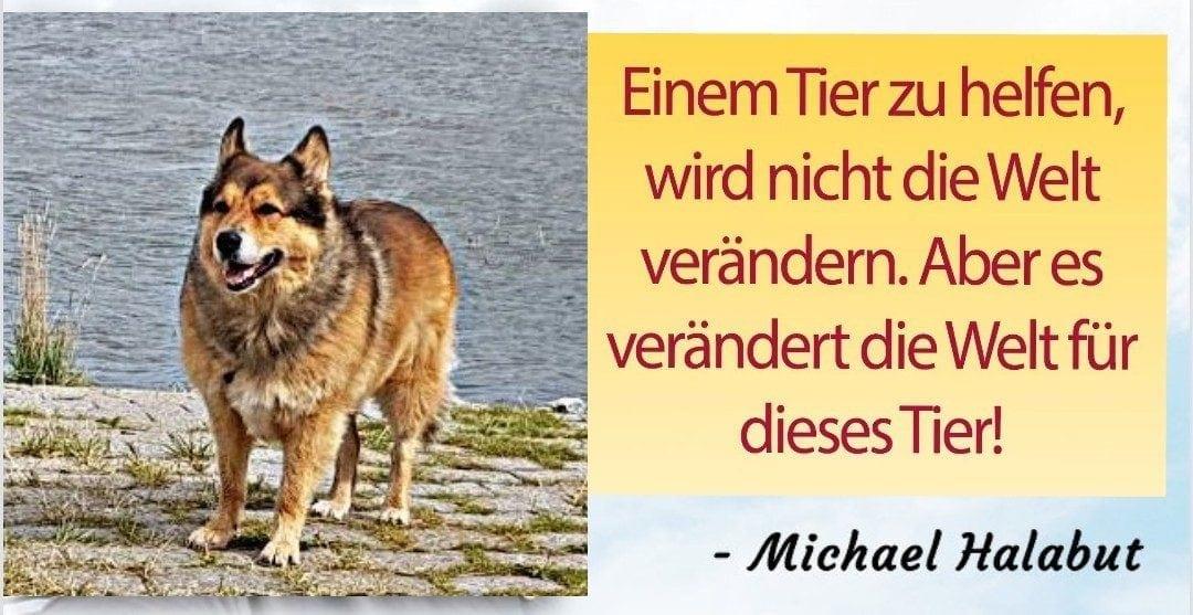 Hunde Foto: Micha und Mogli – True words