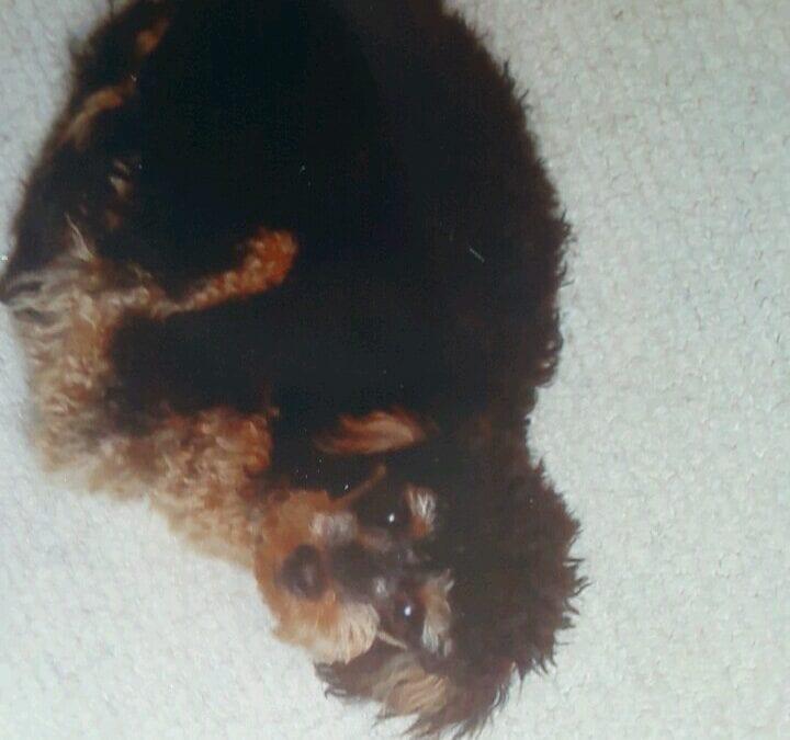 Hunde Foto: Vivian und Beni-Mannfred – Altes Babybild