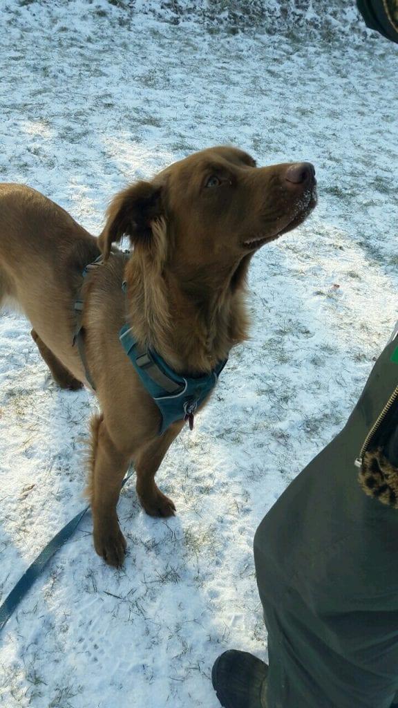 Hunde Foto: Vivian und Speedy - Erster Hundeschultag