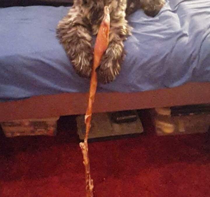 Hunde Foto: Maria und Loki – Wie er leidet!