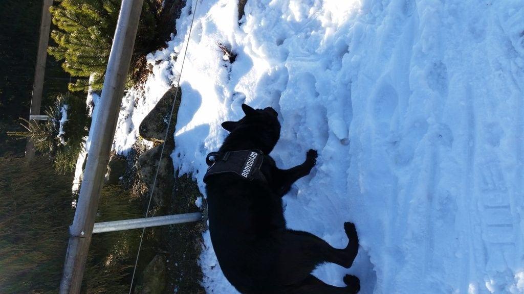 Hunde Foto: Jacqueline und Onyx - Schnuggi