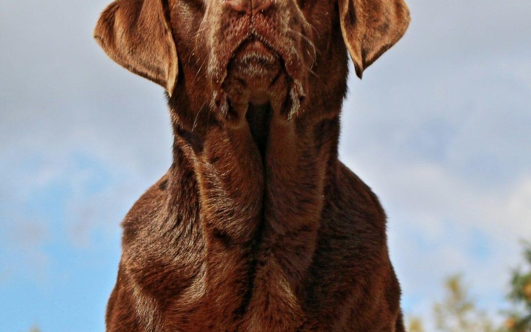 Hunde Foto: Anne und Carlos – ICH !!!😂
