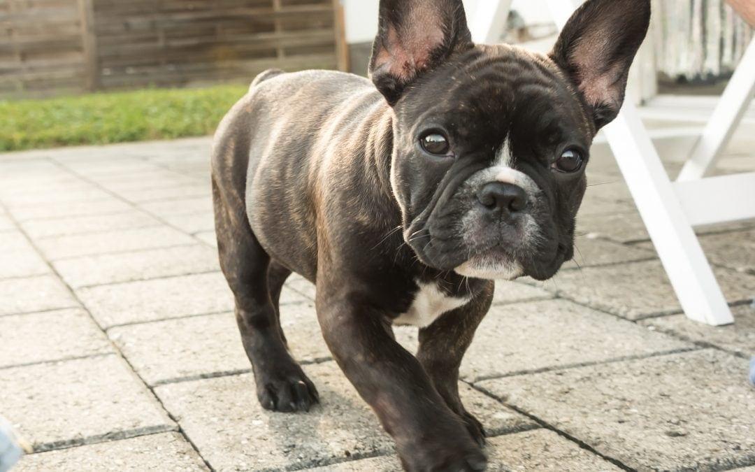 Hunde Foto: Yasmin und Ary – die Knutschnase