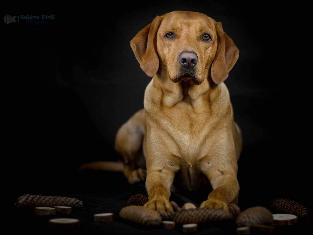 Hunde Foto: Fink und Balu - Blau als Model 😁
