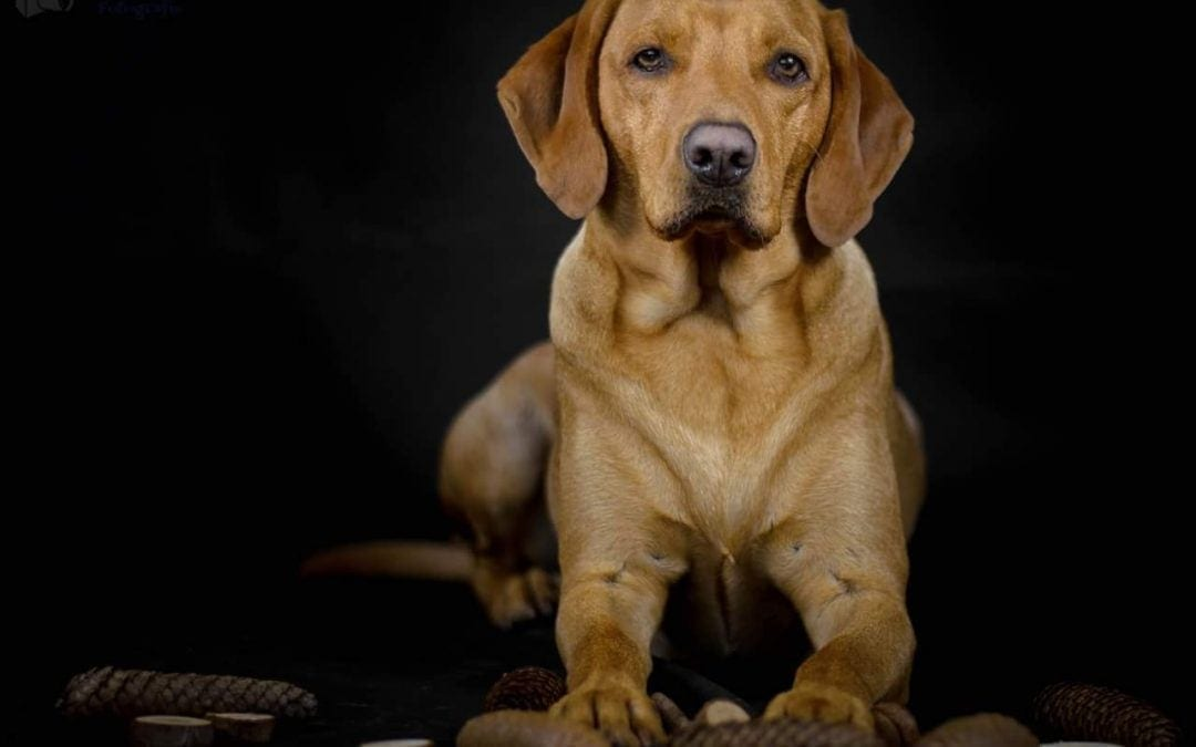 Hunde Foto: Fink und Balu – Blau als Model 😁