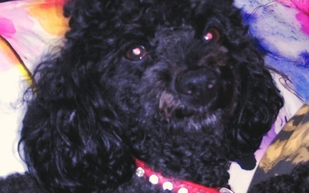 Hunde Foto: Christina und Speedy – Hund des Tages
