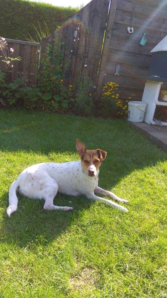 Hunde Foto: Violetta und Lucy - Auch mal Chillig
