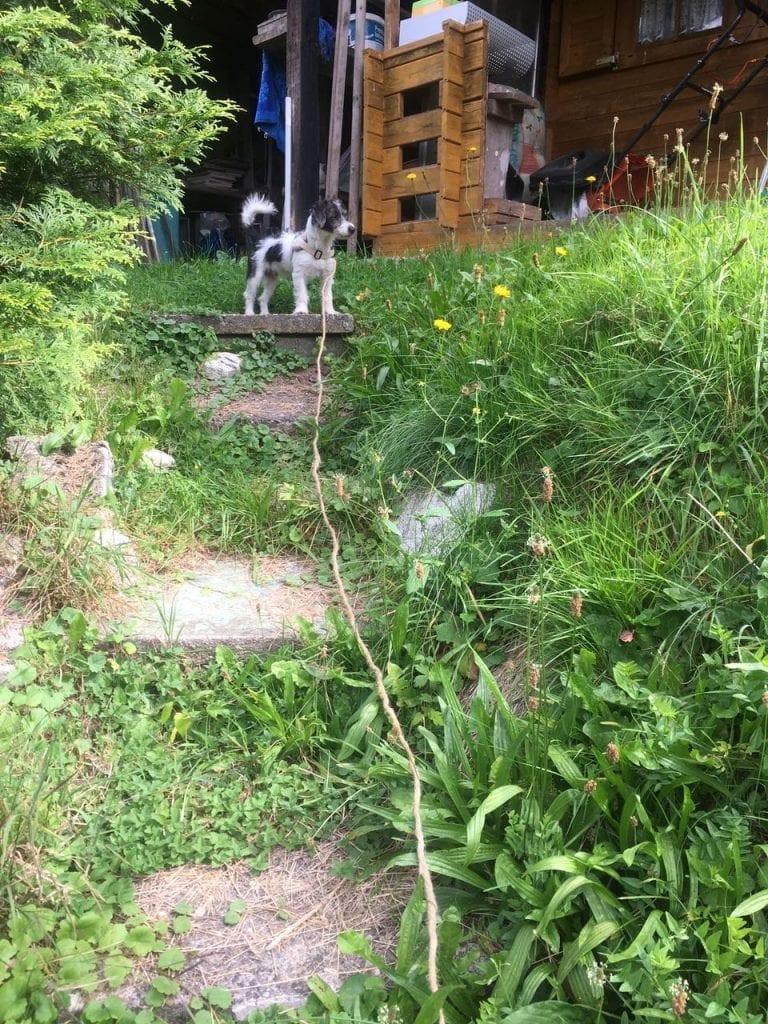 Hunde Foto: Petra und Bobby - Mein reich