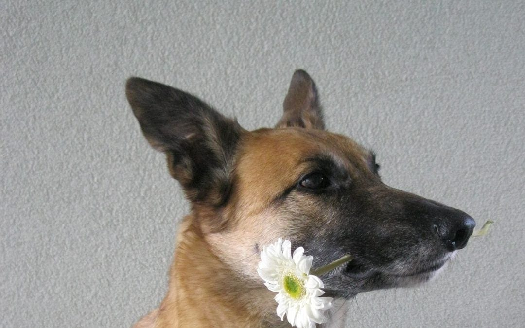 "Hunde Foto: Tanja und Flash – "" Chameur """