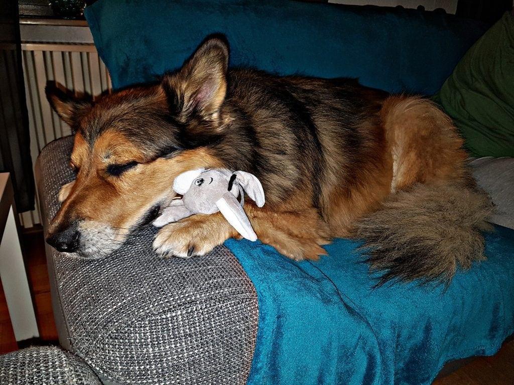Hunde Foto: Micha und Mogli - 2 kleine Esel