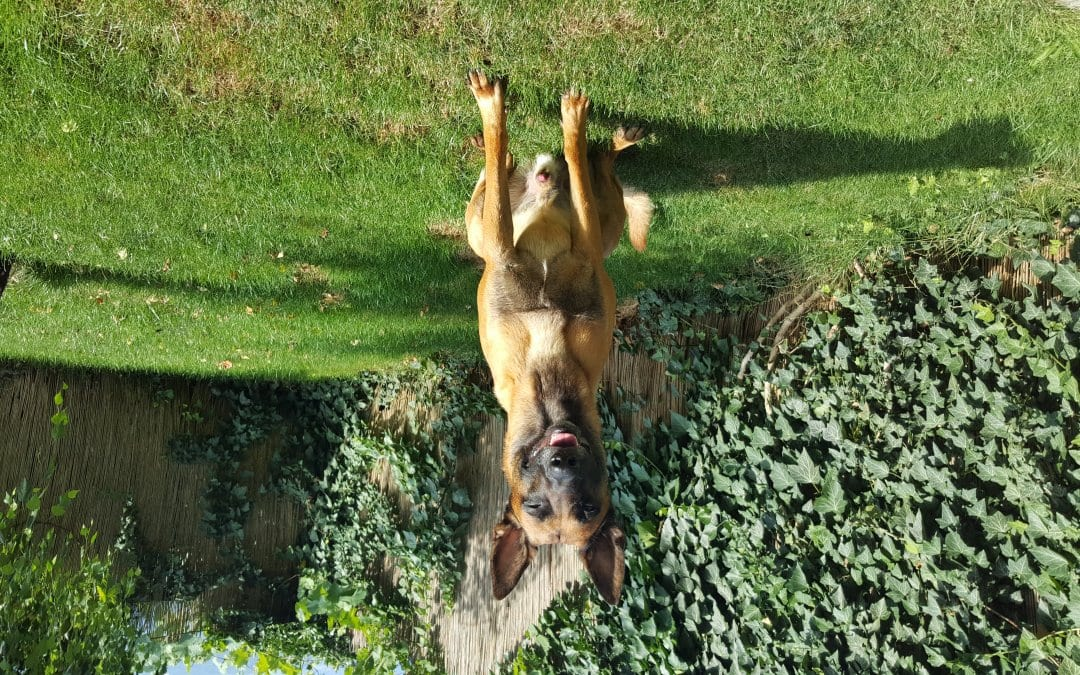 Hunde Foto: silvia und Che le Dou – mein wunderbarer begleiter