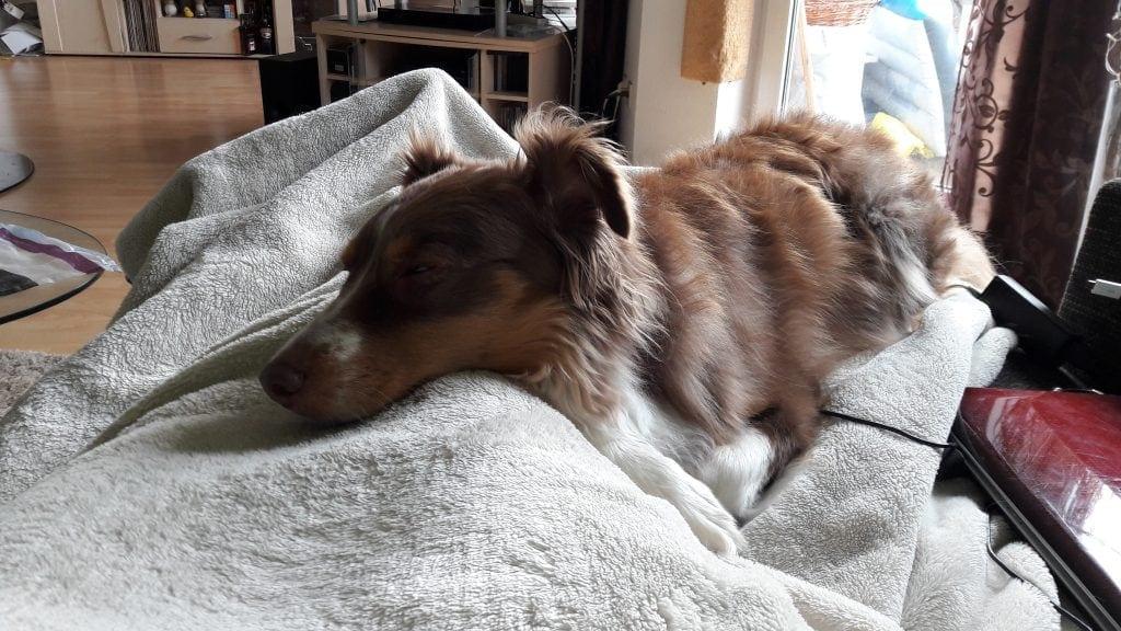 Hunde Foto: Britta und Cassy - Schietwetter