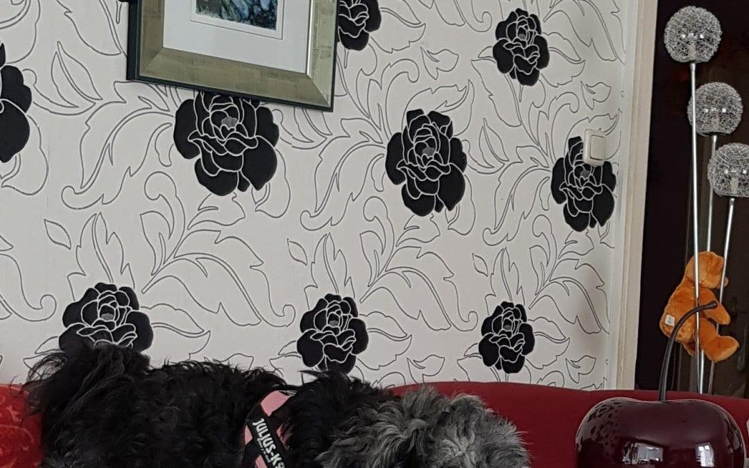 Hunde Foto: Sieglinde und Jimmy – So macht man das als Tibi
