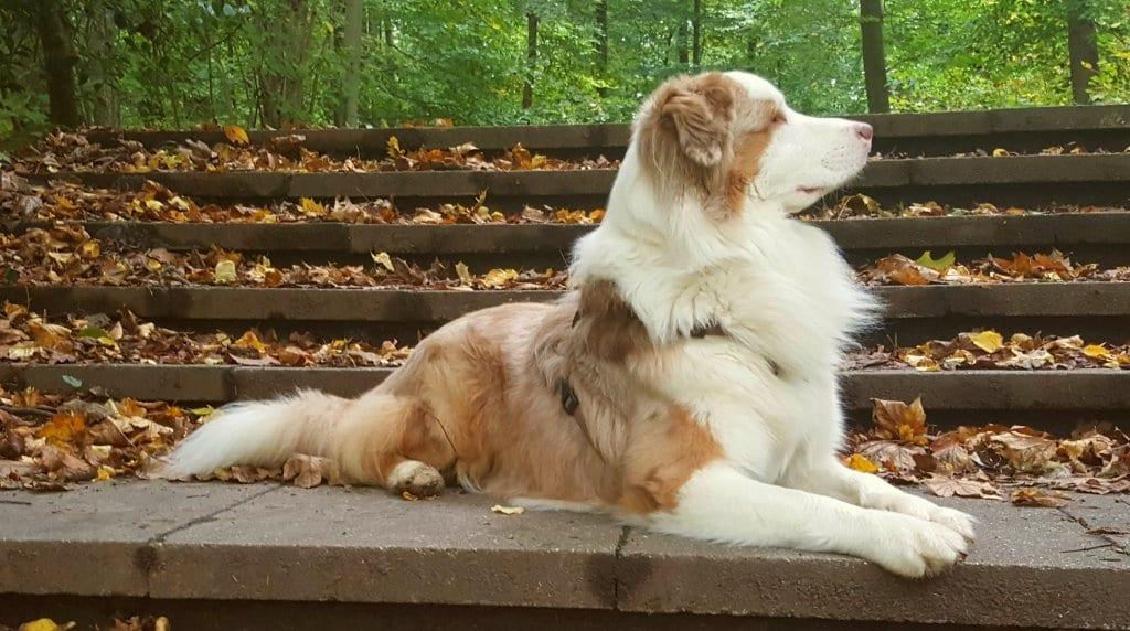 Hunde Foto: Silvia und Yuma - Das Model