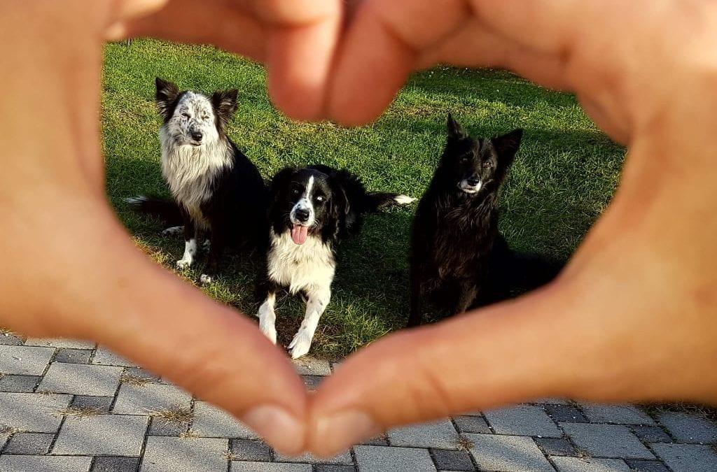Hunde Foto: Alexandra und Kira – King – Kiki – Friday I'm in love… 🎶🎶🎶♥♥♥