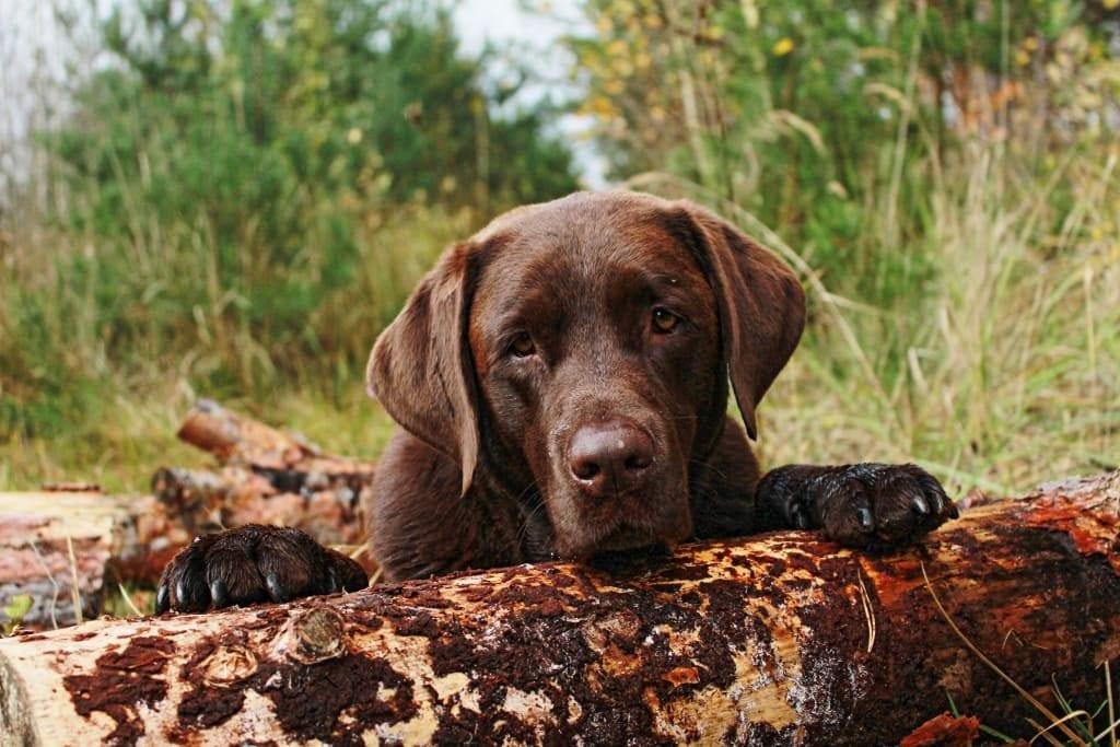 Hunde Foto: Anne und Carlos - Herbst