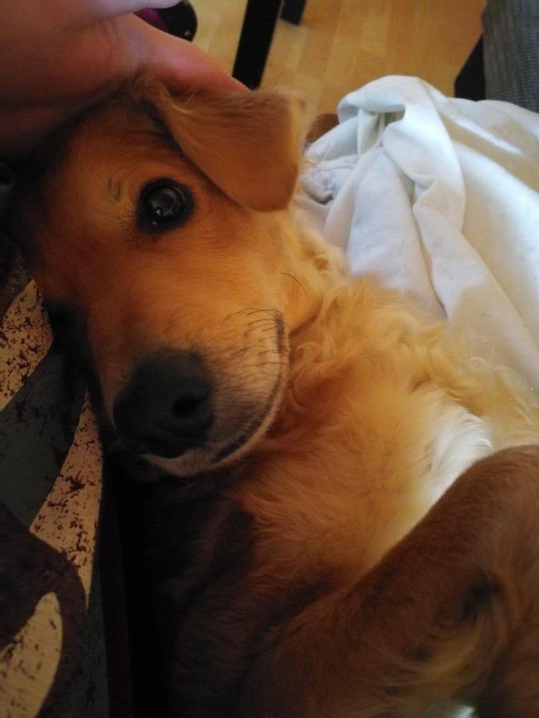 Hunde Foto: Franziska und Lucy - Meine Kuschelmaus :)