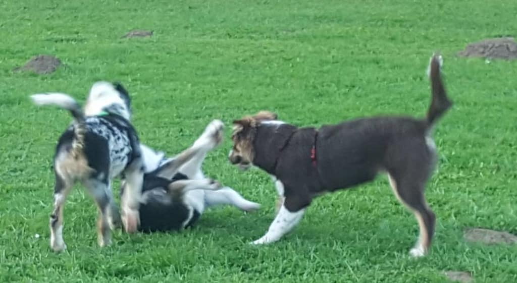 Hunde Foto: Rosemarie und Balto – Bin ich jetzt beinden Mädels beliebt?? 🤓