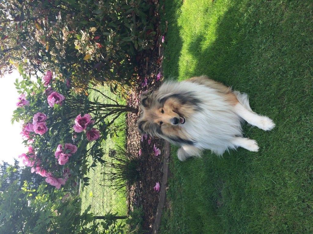 Hunde Foto: Doris und Jolina-Kira from  the Half-Timbered-House - Ich bin so schön wie die Blume hinter mir!