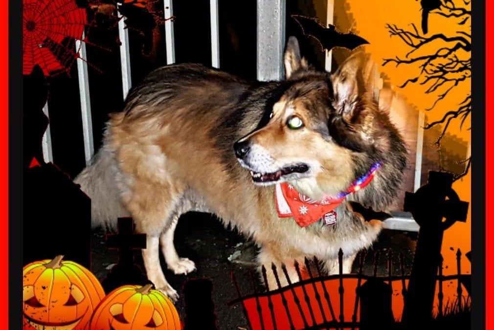 Hunde Foto: Micha und Mogli – Happy Halloween