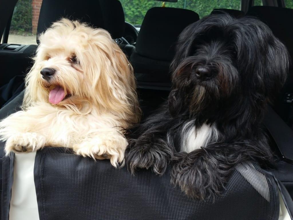 Hunde Foto: Karin und Michel und Louis - Zwei zum Knutschen