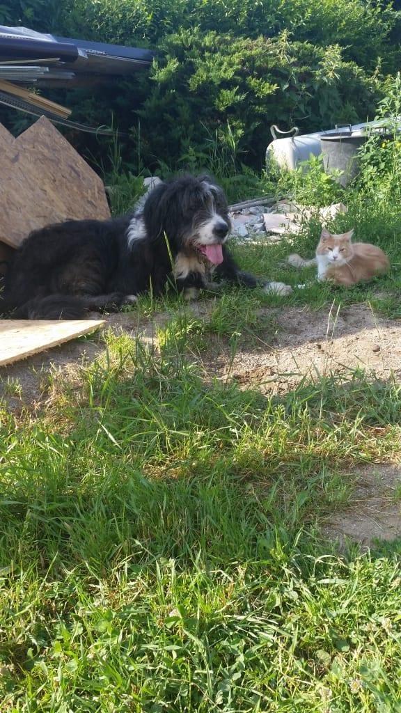 Hunde Foto: Solveig und Strolch - Zwei gute Freunde