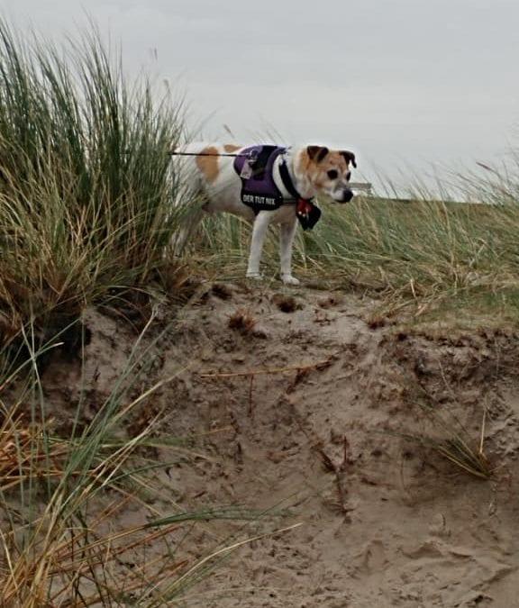 Hunde Foto: Marilena und Nicki – Nicki in den Dünen