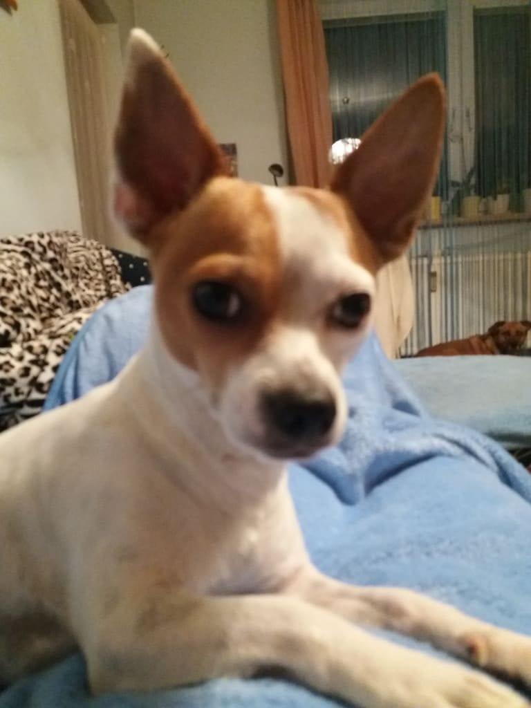 Hunde Foto: Iris und Rocco - Der neugierige