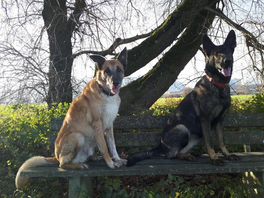 Hunde Foto: Tanja und Flash & Shakira - Therapeuten mit Fell und 8 Pfoten