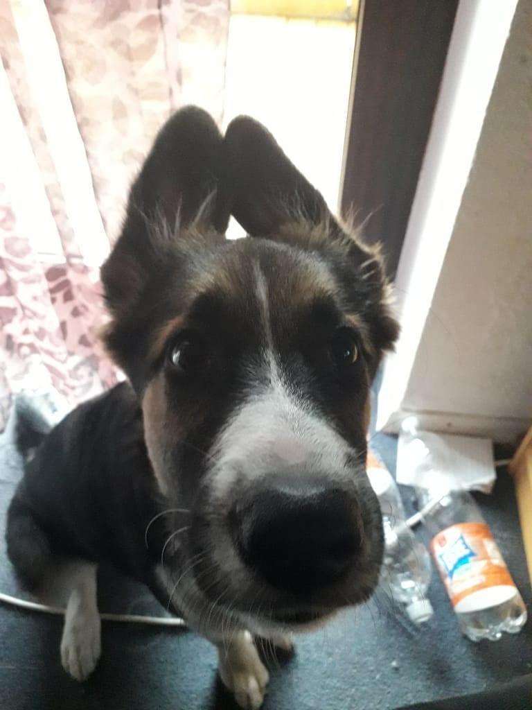 Hunde Foto: Rosemarie und Balto - Darf ich dein Fleischkäse habrn??? 🙂