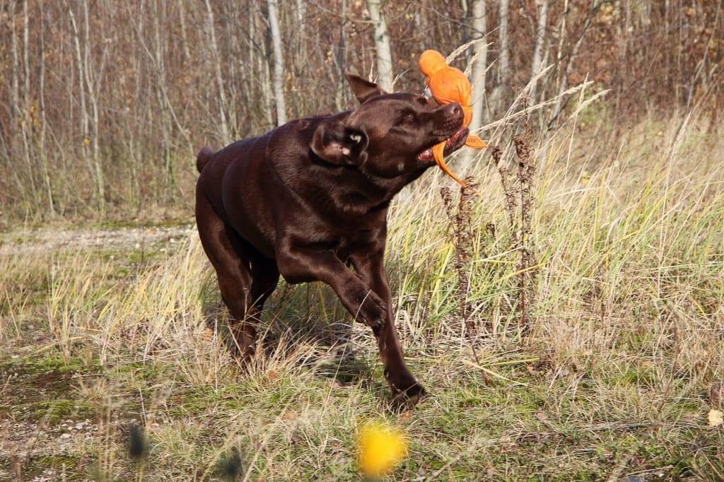 Hunde Foto: Anne und Carlos - Einfach nur Freude