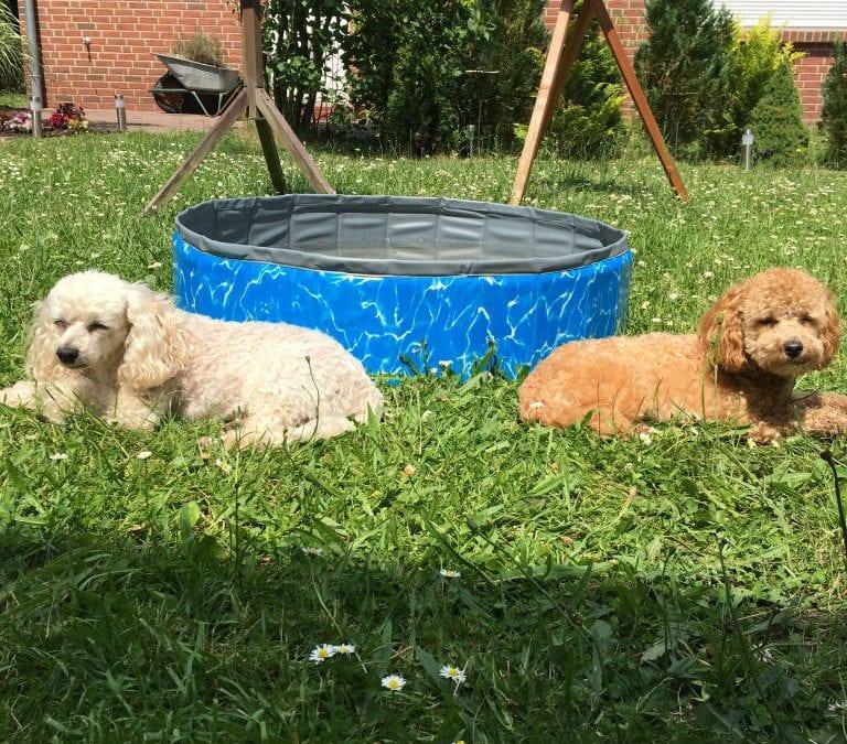 Hunde Foto: Karin und Gissi und MontyToypudel – Wann wird es wieder Sommer?