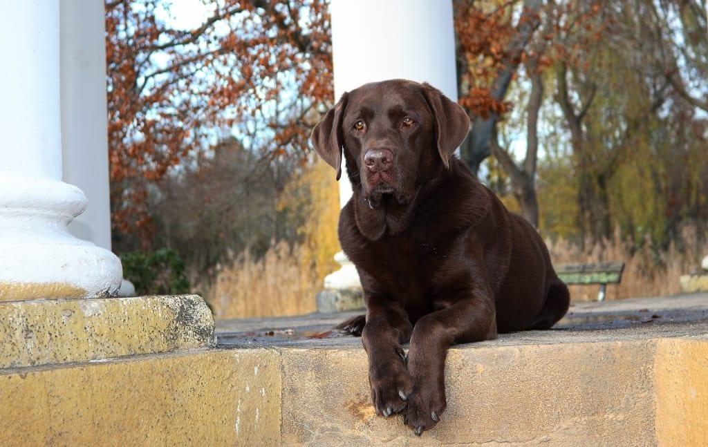 Hunde Foto: Anne und Carlos - Im Pavilion