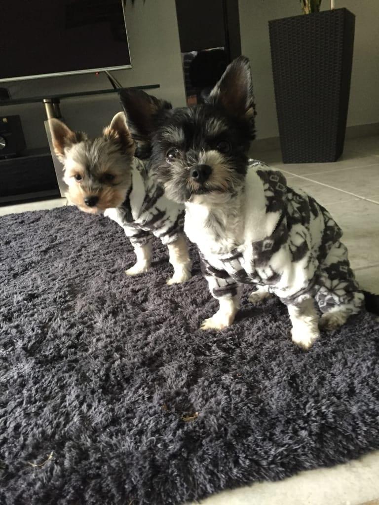 Hunde Foto: Cecile und Fiesta& Julie - Startklar für die Kälte❤️