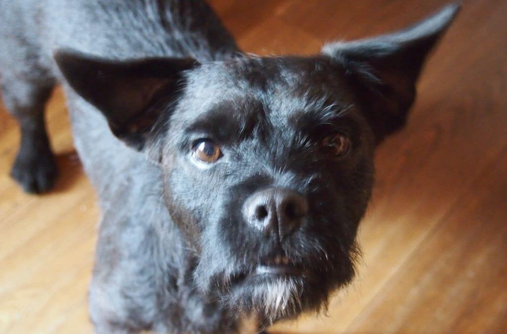 Hunde Foto: Günter und Butch – Nichtflieger