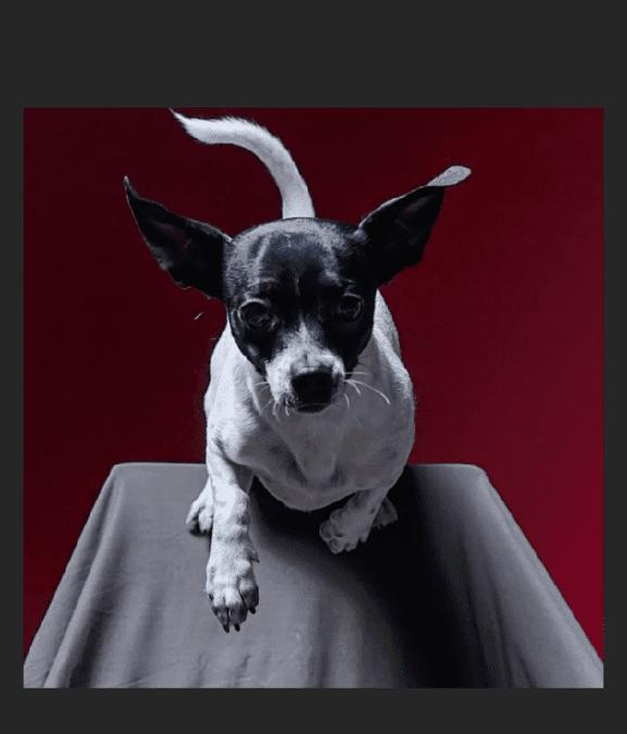 Hunde Foto: Teresa und Rino – Rino der Überflieger