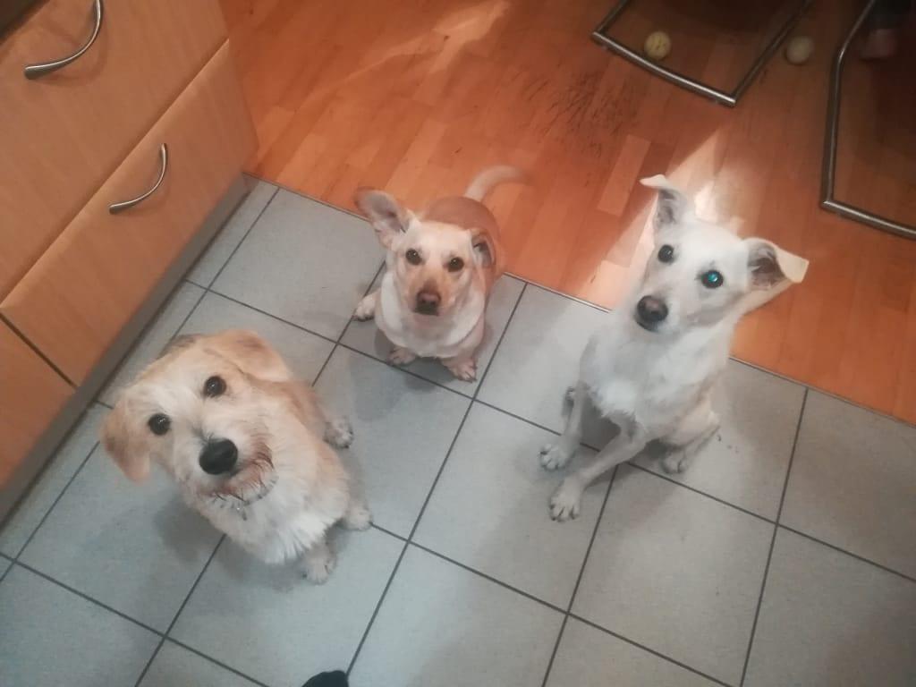 Hunde Foto: Susanne und Susanne Linke - Drei gute Freunde