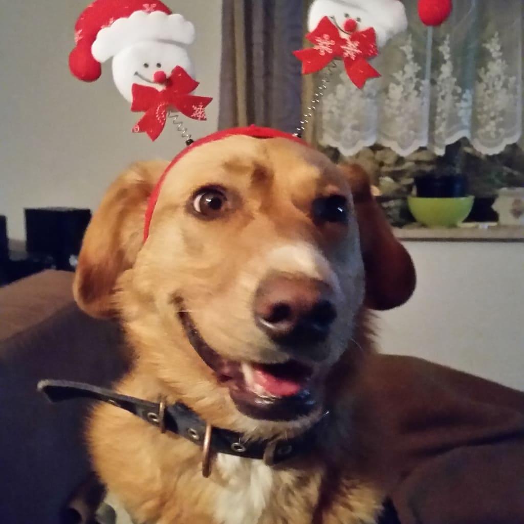 Hunde Foto: Sylke und Simba - Ist den jetzt svhon Weihnachten