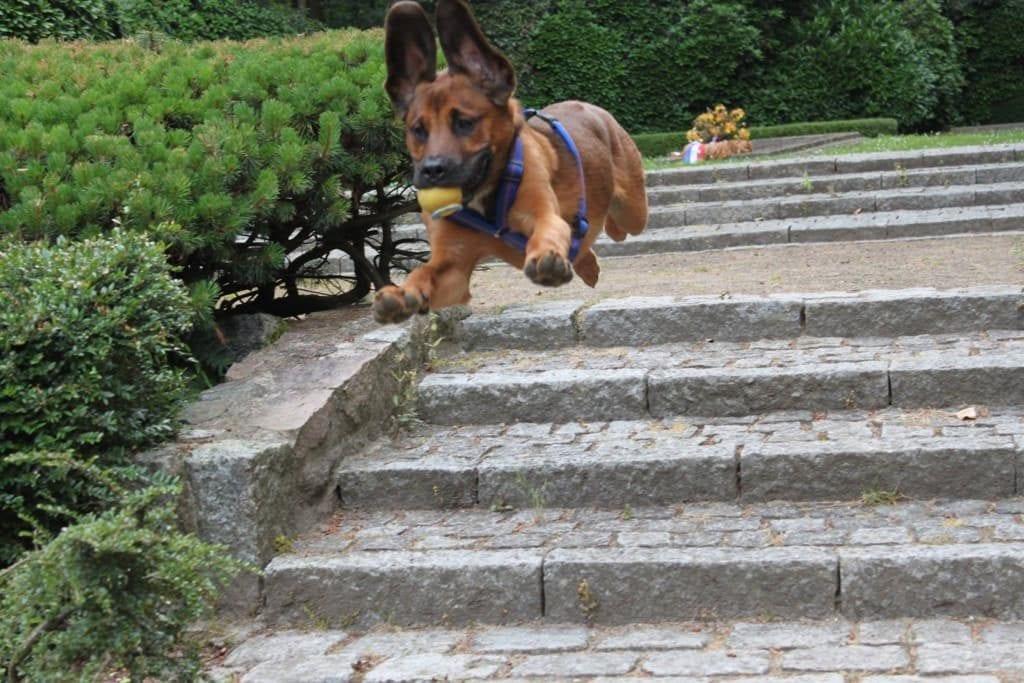 Hunde Foto: Gaby und Bubble - Nur fliegen ist schöner