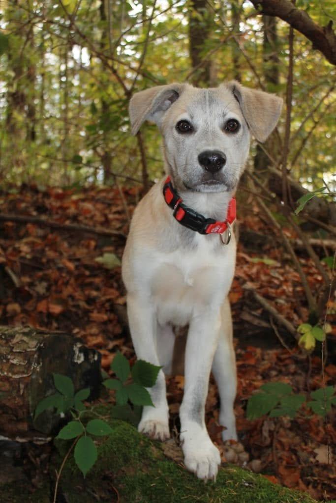 Hunde Foto: Melanie und Sam - Herbstwald