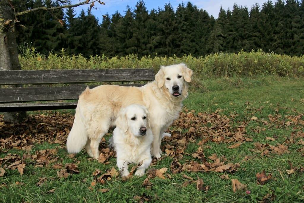 Hunde Foto: Michaela und Shadow und Sunya - Dream Team