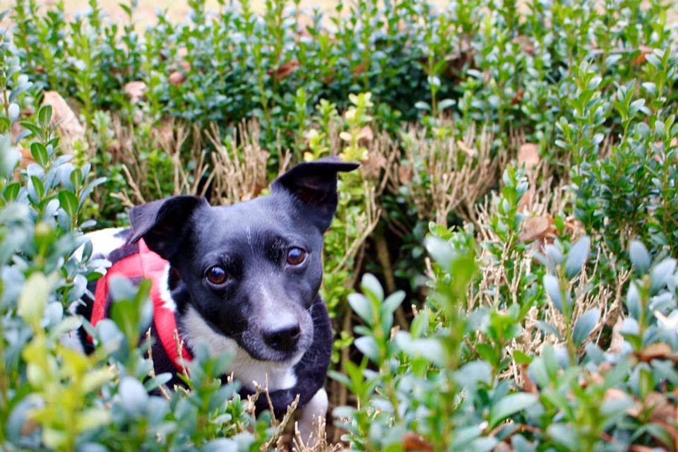 Hunde Foto: Sofie und Tiffy – Tiffy im Grünen