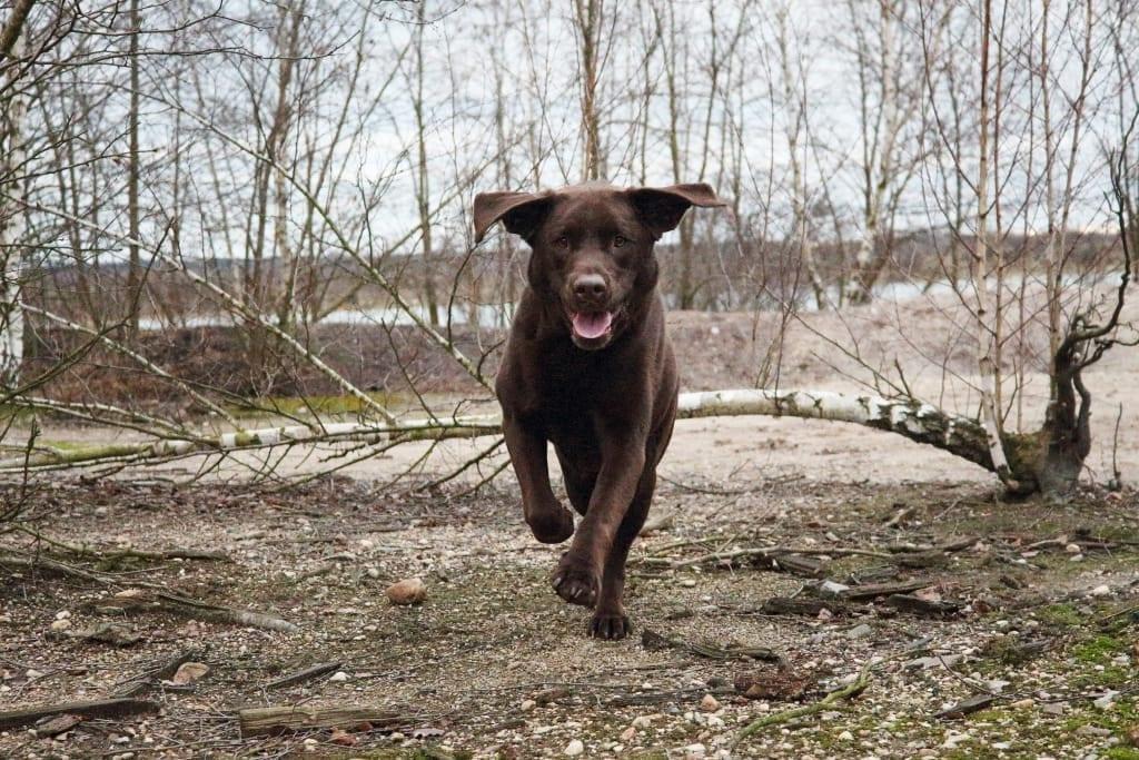 Hunde Foto: Anne und Carlos - Austoben