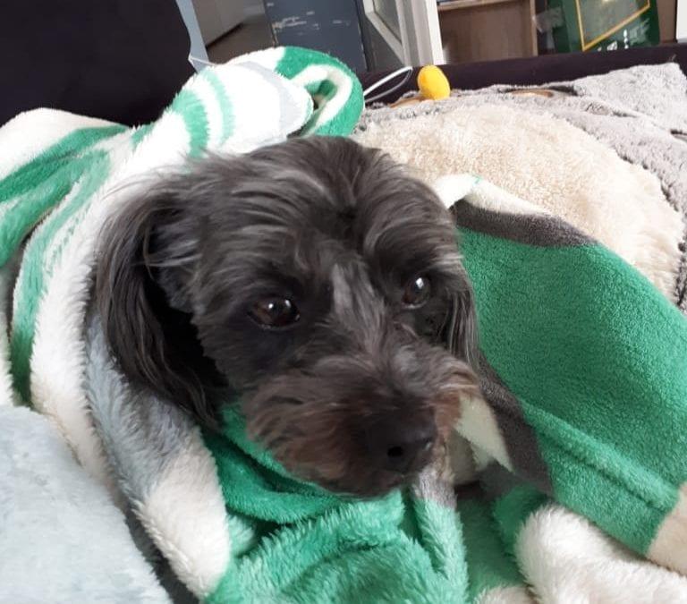 Hunde Foto: Claudia und Maxi – Maxi liebt auch die Wärme